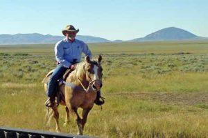 animal disease traceability